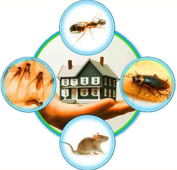 Tips on Hiring the Best Pest Control Service Company