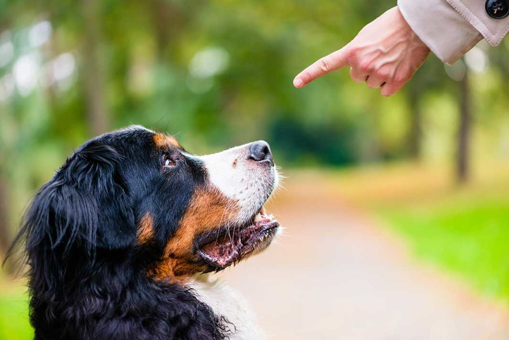 Dog Bites In Denver- When You Need A Dog Bite Attorney